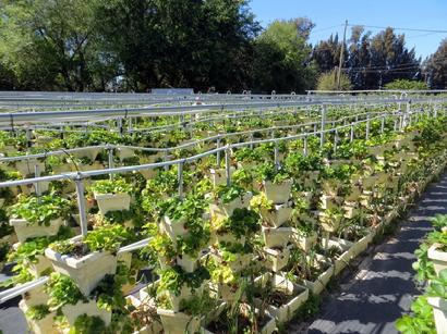 Hydroponic Gardening, School Gardens, You Pick Farm